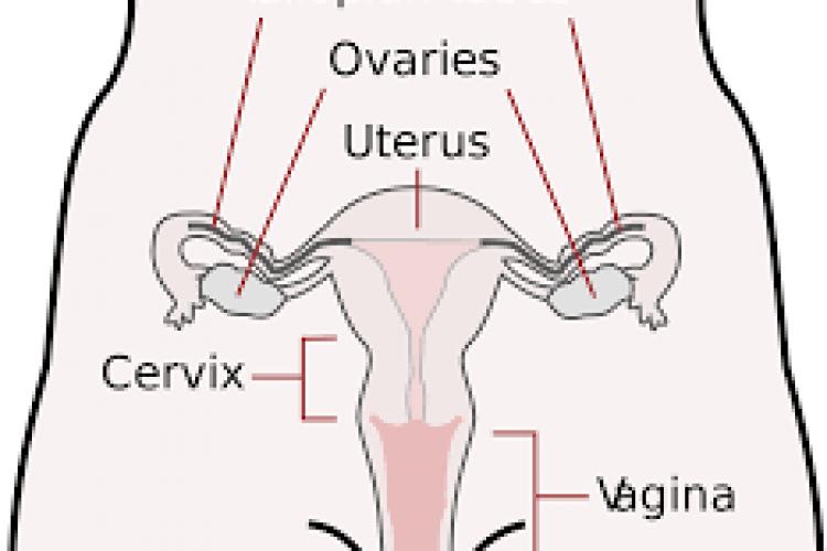 Het rijpen van de baarmoedermond