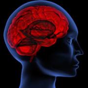 bouwplan voor de hersenen