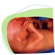 Zwangerschap week 17