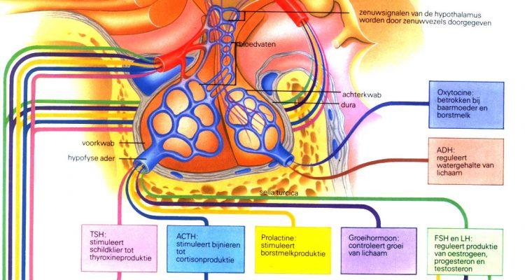 Hormonen en de bevalling