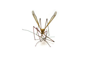 insectenbeten kinderen