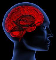 bouwplanvoor de hersenen