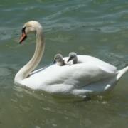 werkende moeder