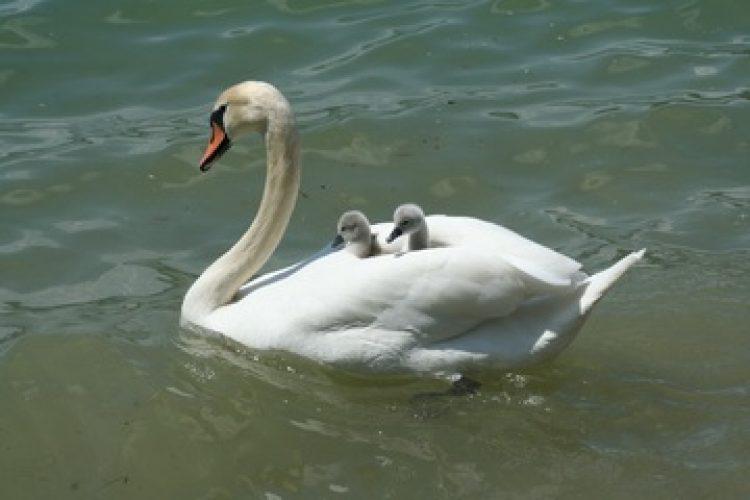 Lang leve de werkende moeders