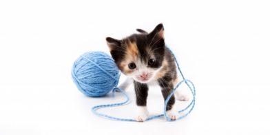 Toxoplasmose: moet de kat de deur uit ?