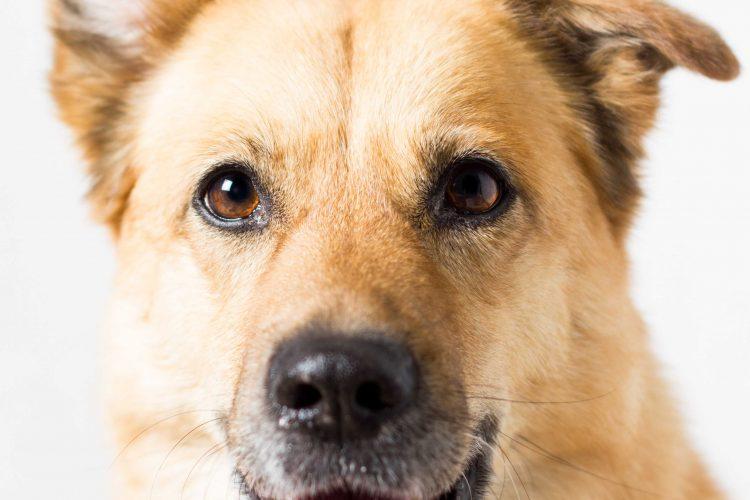 De loodgieter… zonder kranen: een gezin zonder hond