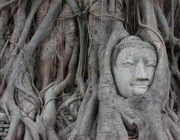 een rondreis door Thailand met de kinderen