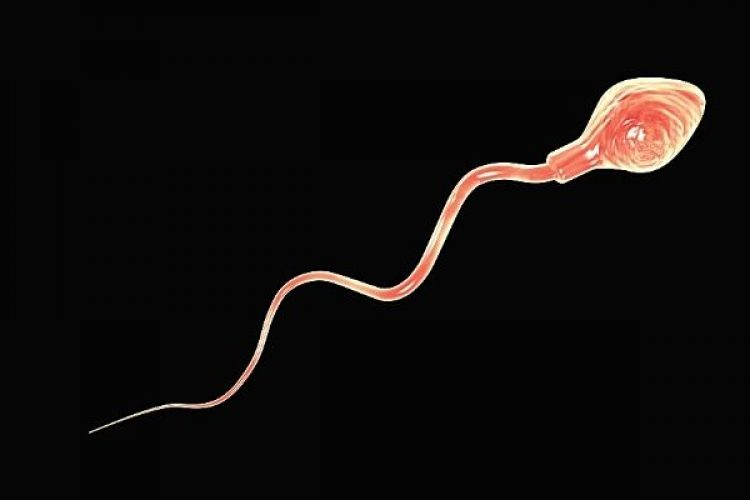 alles over sperma