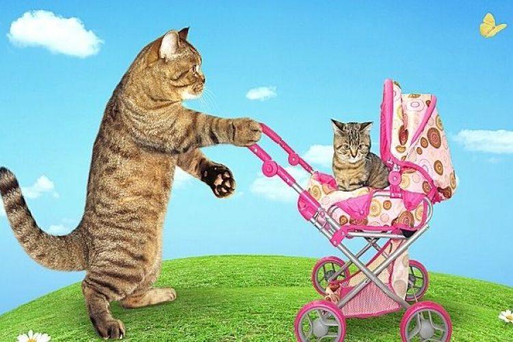 Mag de baby naar buiten?