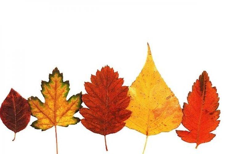 Knutselen in de herfst: de leukste DIY knutsels met je kinderen