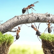 mierenbeten